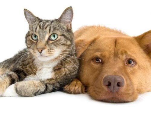 4 Things You Must Know About CBD Oil Pet Products