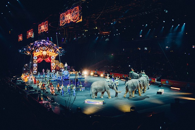 Why did Thomas Edison Electrocute an Elephant- Circus